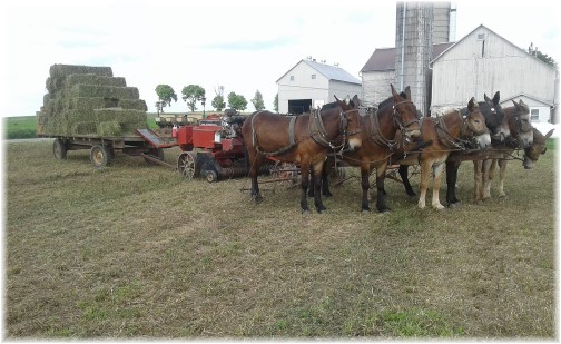 Old Windmill Farm hay baling team 6/7/18 (Click to enlarge)