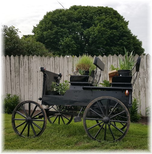 Amish open cart with flowers 5/11/17