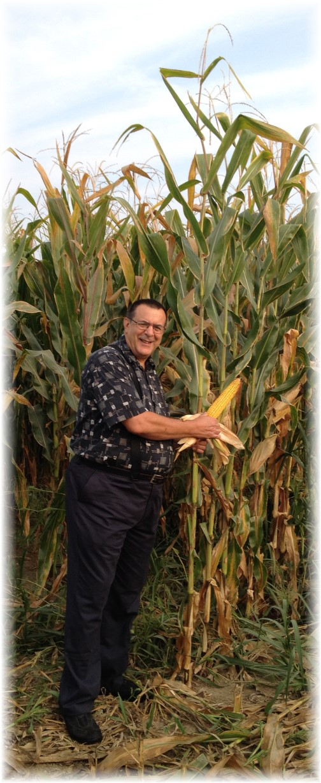 Tall corn on Amish farm 9/2/15
