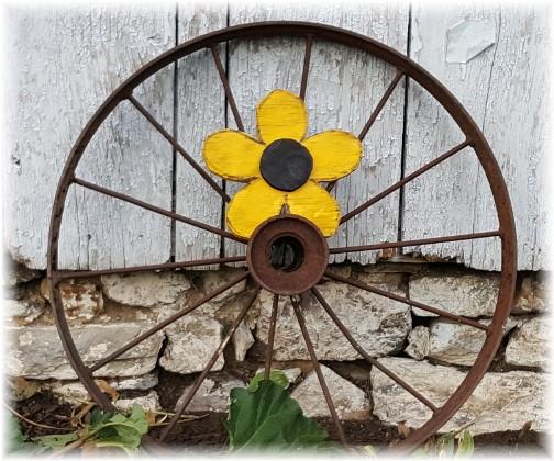 Wagonwheel flower (Photo by Eli Lapp)