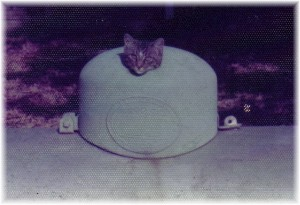 Our first cat, Coon, on propane tank