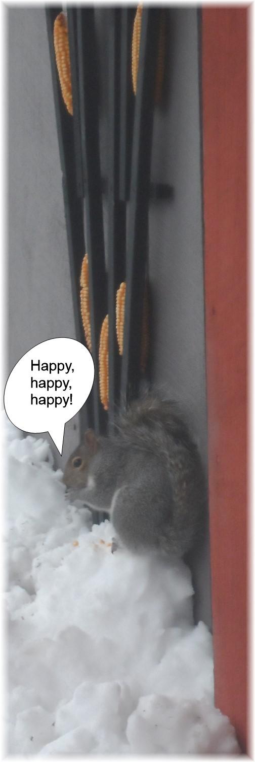Squirrel feeding in snow 2/5/14