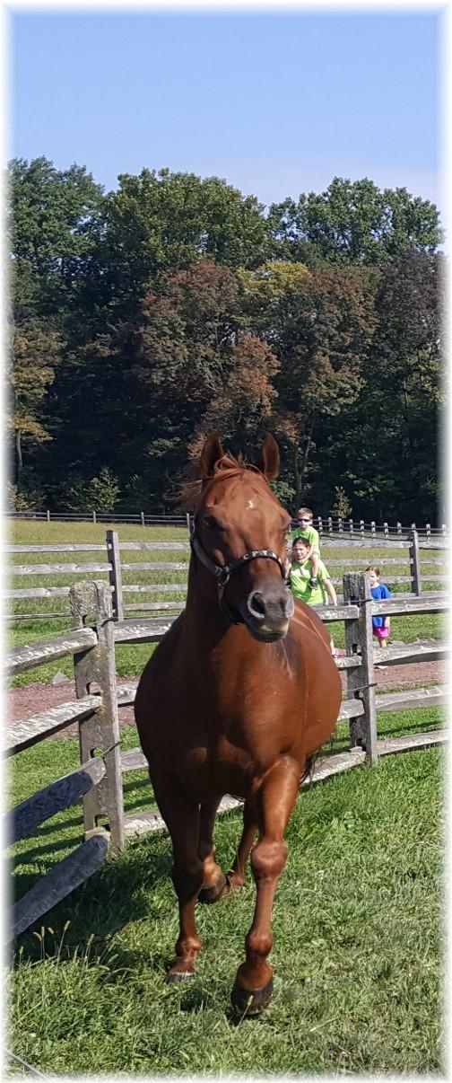 Horse at Ironstone Ranch 9/16/17