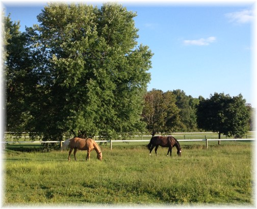 Lebanon County horses 8/26/15