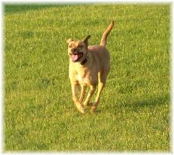 Roxie running