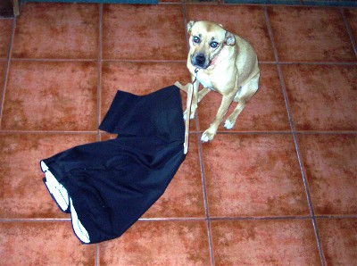 Roxie with slacks