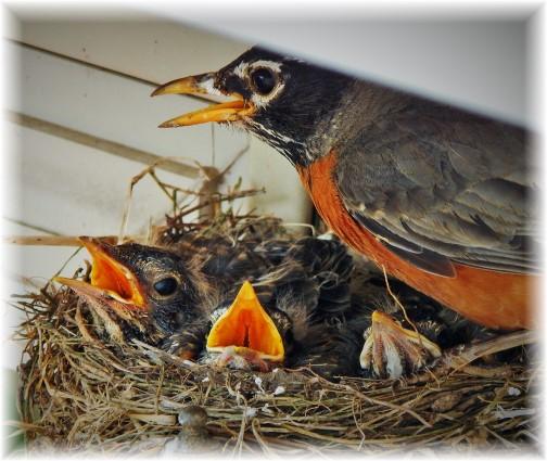 Robins 5/27/15