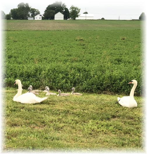 Swan family, Lancaster County, PA 5/28/18