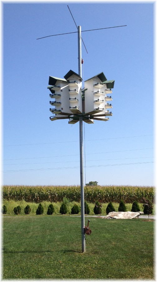 Purple Martin bird house near New Holland, PA 9/4/14
