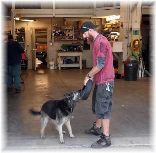 Sheba, Smucker company dog