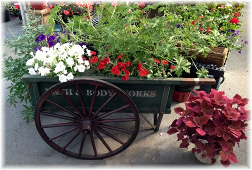 Cherry Hill orchards flower cart 7/3/14