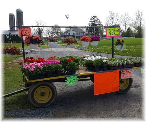 Flower wagon near New Holland, PA 4/27/17
