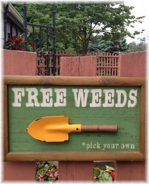 Free weeds!