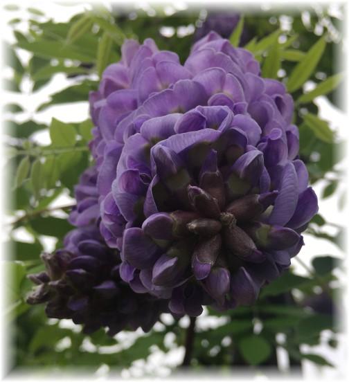 Hershey Gardens flower 5/23/17