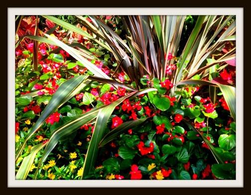 Longwood Gardens (Nick Nichols)