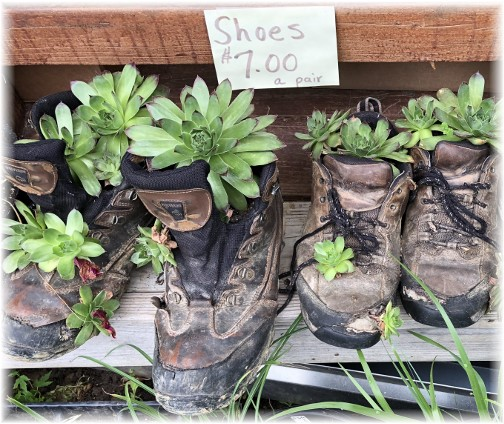 Shoe planters at a small Amish owned greenhouse, Lancaster County, PA 6/1/18