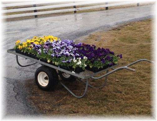 Spring flower cart 3/26/15