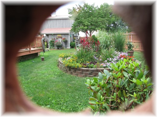 Backyard view 8/20/14 (Photo by Mike Weber)