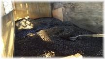 Coal bin 2/2/17