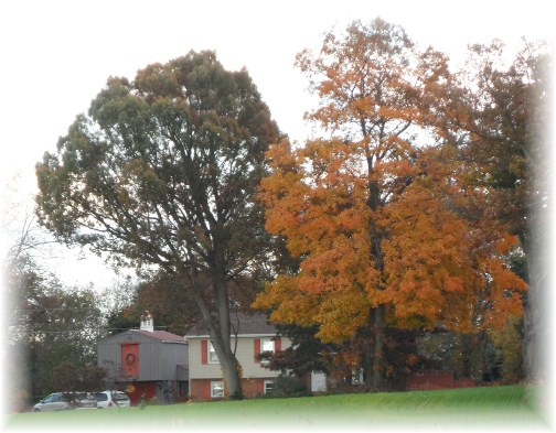 View of our home in Autumn 10/20/12