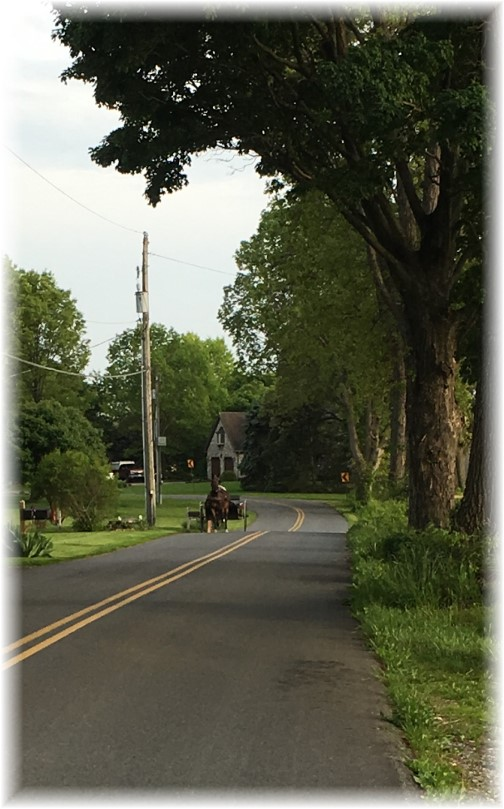 Kraybill Church Road 5/17/16 (Photo by Ester)
