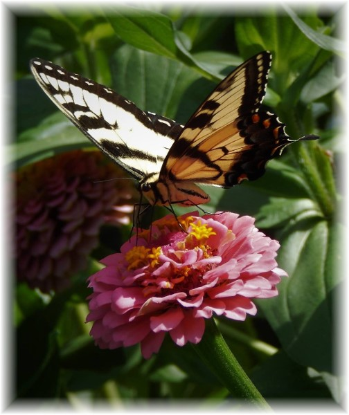 Butterfly on flower (Photo by Ester Weber)
