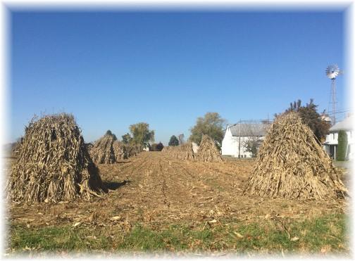 Corn shocks 11/4/15