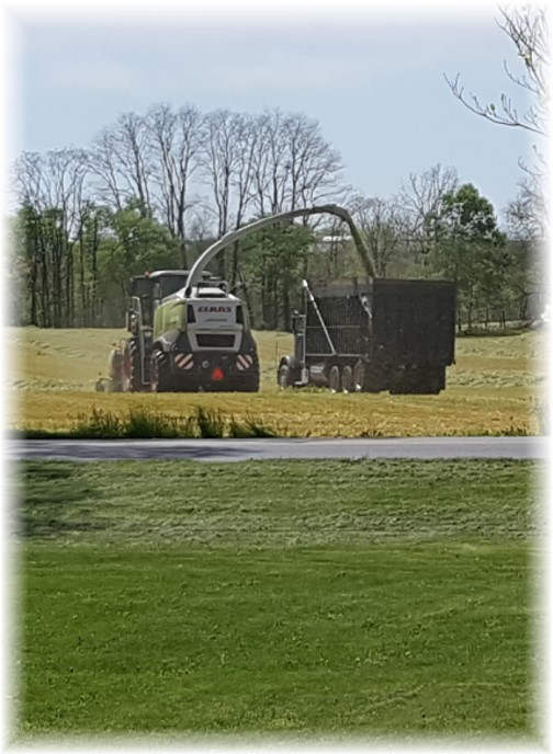 Rye harvest 4/28/17