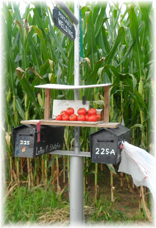 Mailbox tomatoes for sale in Lancaster County 8/22/13