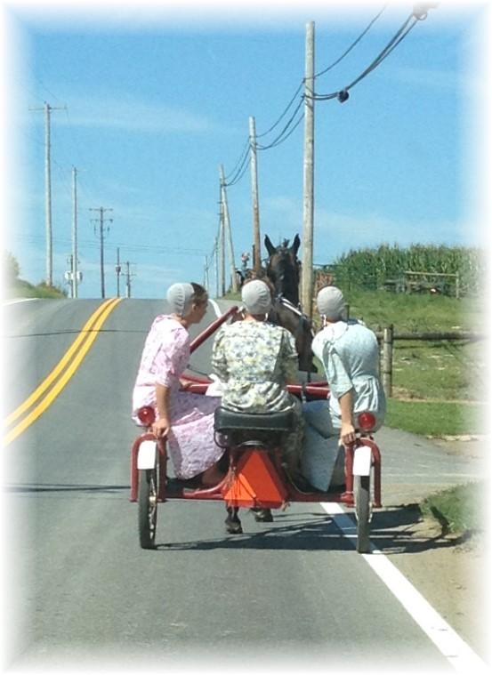 Mennonite girls on horse-drawn cart 7/23/15
