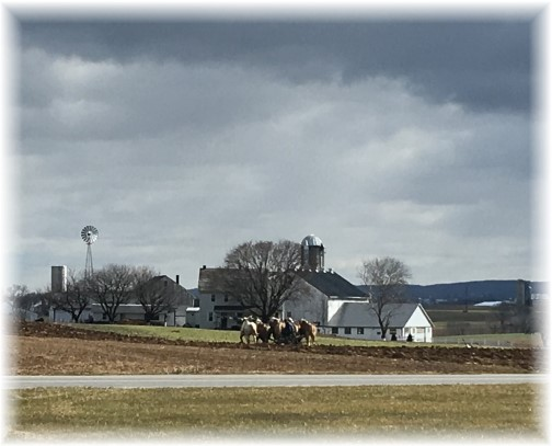 Mennonite farmer plowing with team horses 2/16/17
