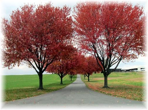 Rock Point Road farm lane, Lancaster County PA 11/10/13