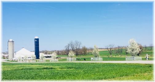 Farm lane near Strasburg, PA 4/23/18 (Click to enlarge)