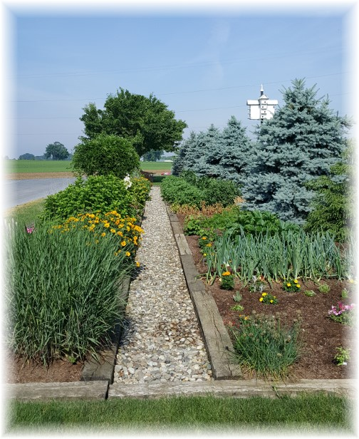 Stumptown Road garden 6/22/17
