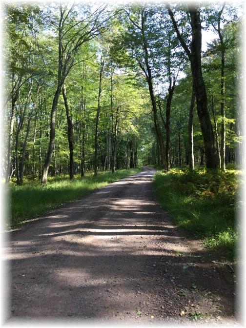 Gravel Road in Hickory Run State Park, Poconos 9/18/15