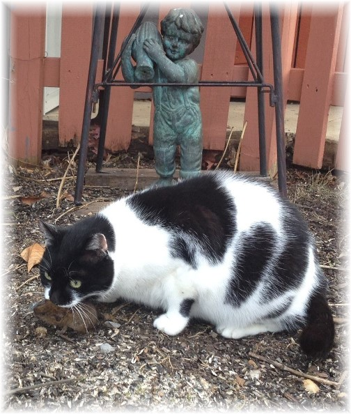 Dottie with mouse 12/30/14
