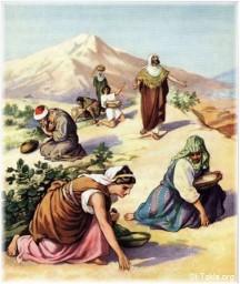 Collecting manna