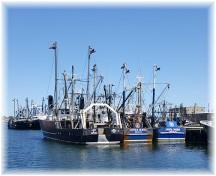 New Bedford scallop fleet
