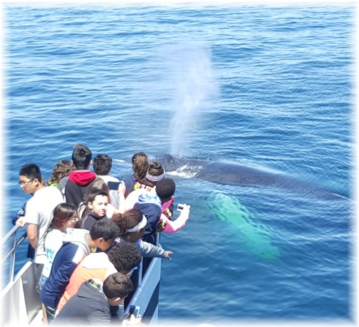 Whale watch 6/17/16