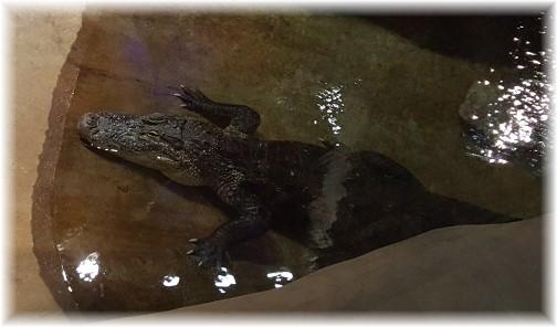 Bass Pro Shops alligator 8/8/17