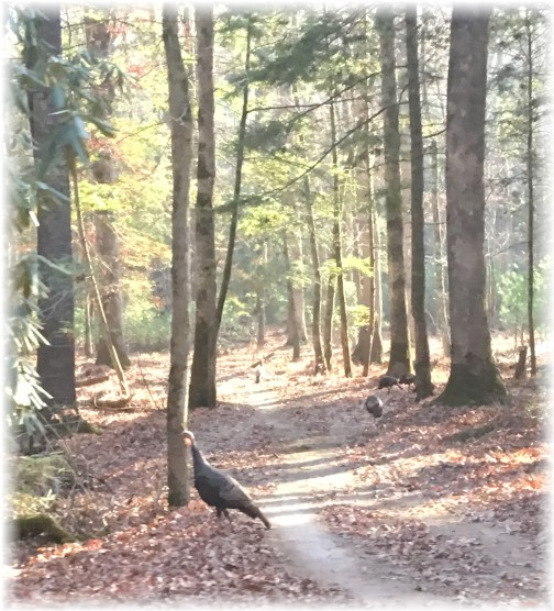 Cade's Cove trail 11/21/16