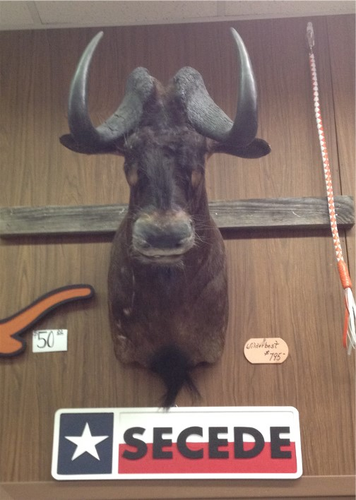 Mount at leather shop in New Braunfels Texas 5/6/14