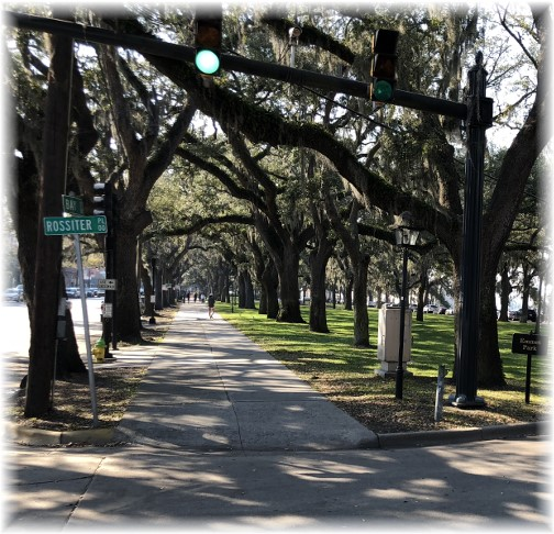 Savannah Park live oaks