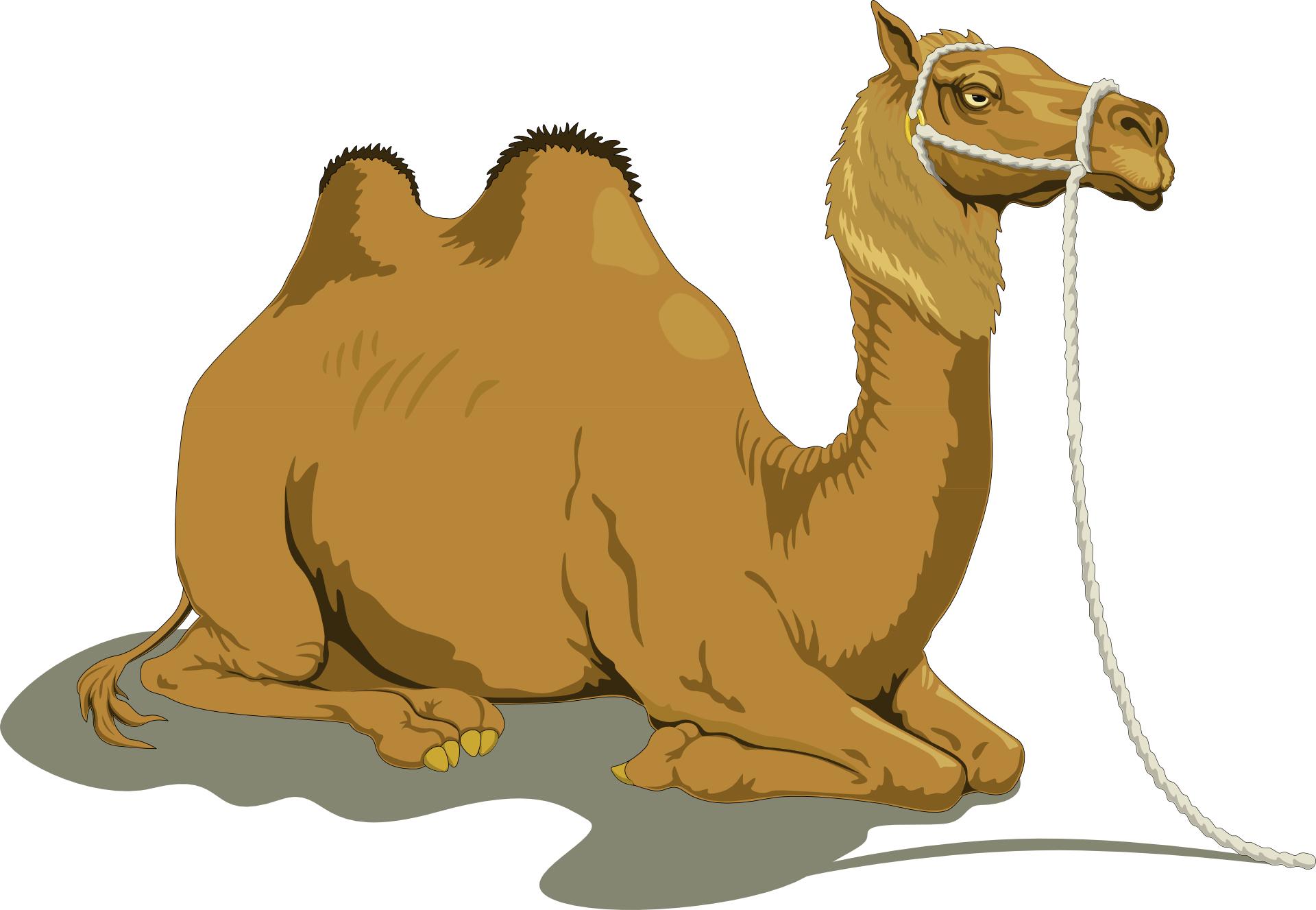 Brown Lying camel vector
