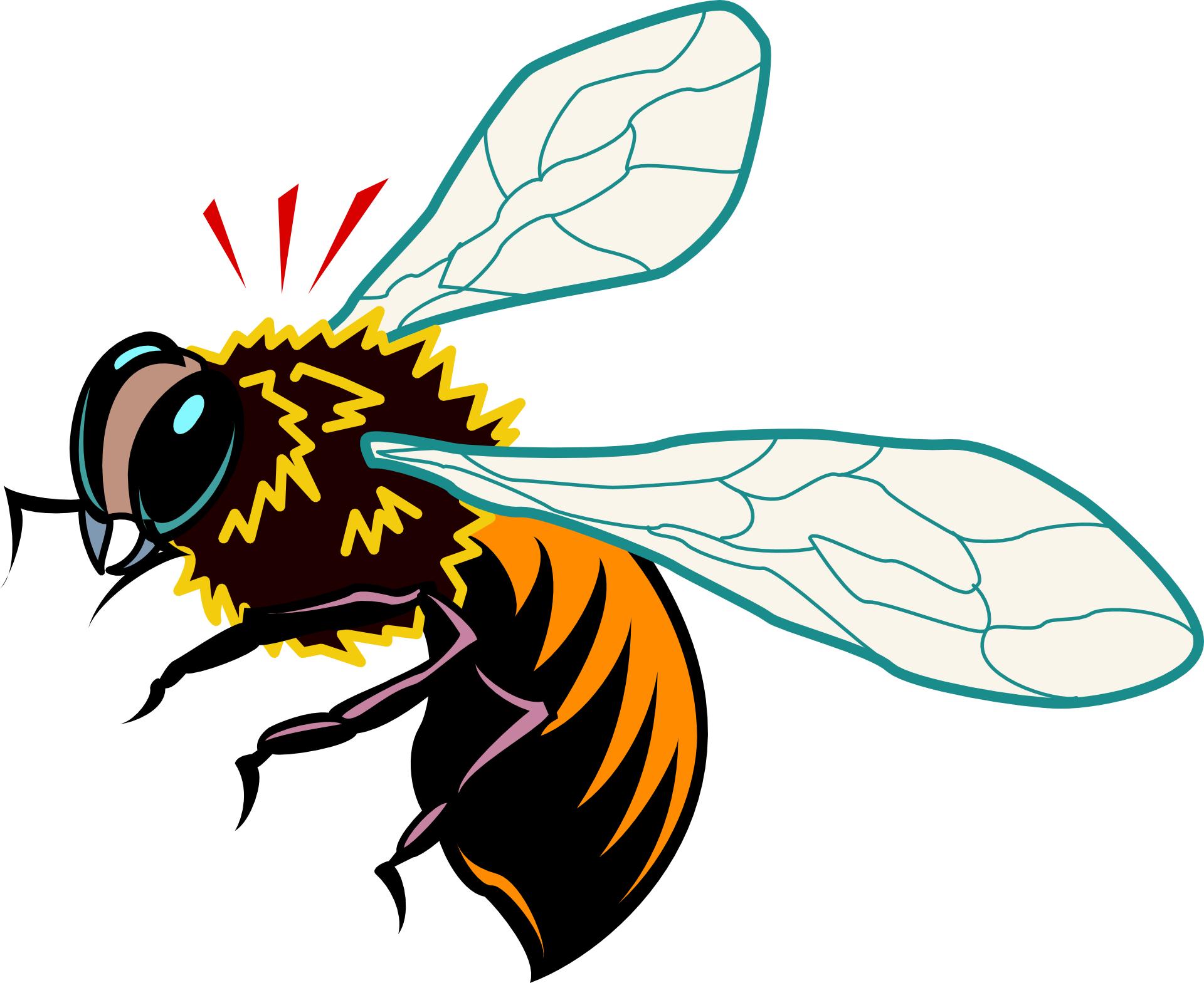 Cartoon animal bee,honey bee vector