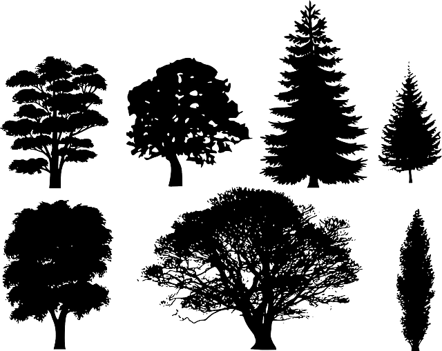 Free Vector Tree-evergreen simple outline
