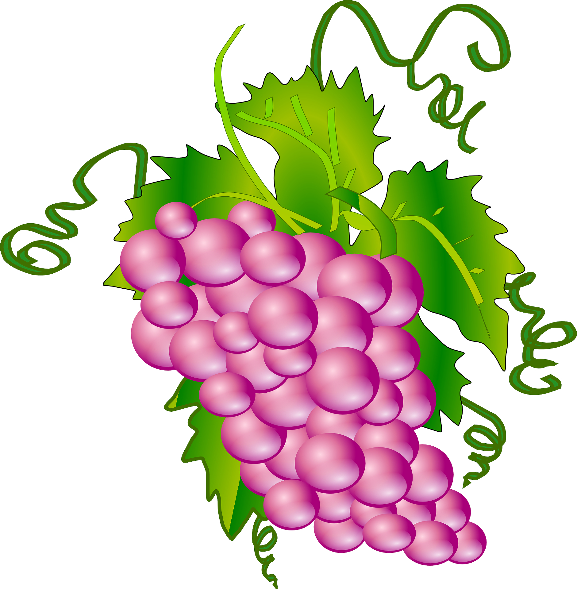 Fruit,vitis vinifera,cartoon grape vector