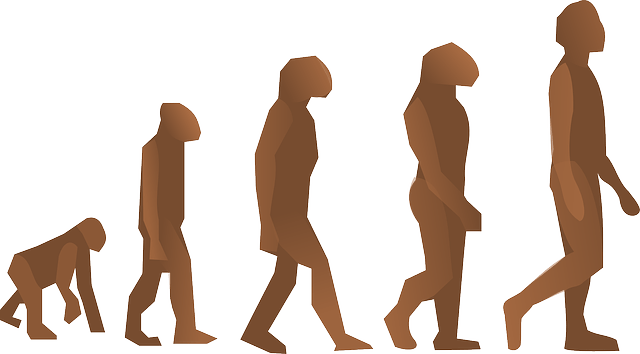 human evolution image free vector