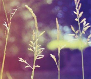 Tending to Your Inner Weeds