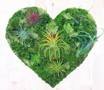 The Magic of Moss and What it Teaches Us